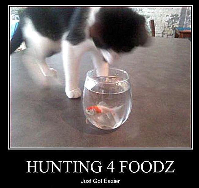 cat & peixe funny