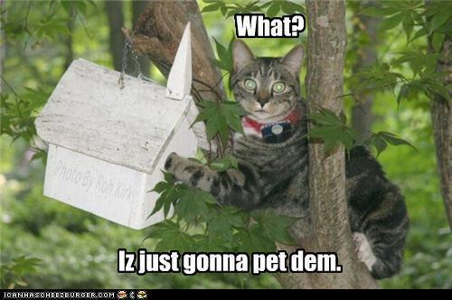 cat fun :)