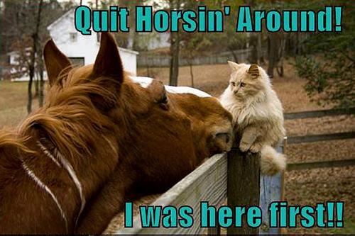 cat & horse funny