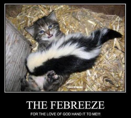 cat & skunk funny