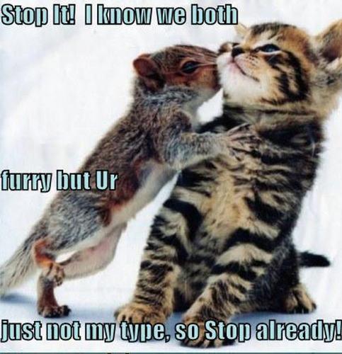 cat & eekhoorn funny