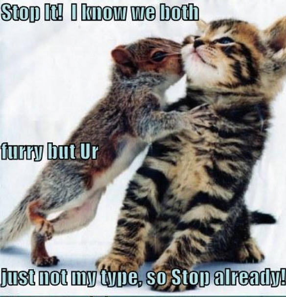cat & squirrel funny