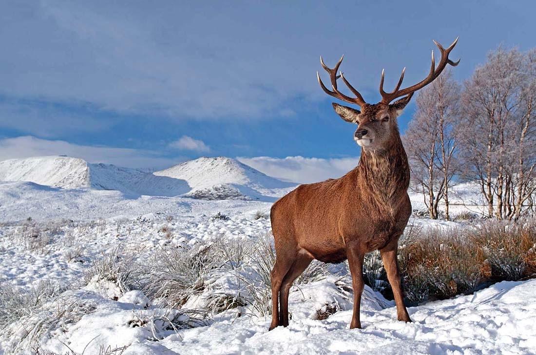 deer - deer Photo  Deer
