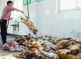 Against Animal Cruelty! 바탕화면 containing a 조가비, 조가 비 and a 의해 catch called stop