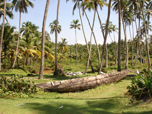 A typical Kerala Coconut Farm - Kerala Photo (20075146) - Fanpop