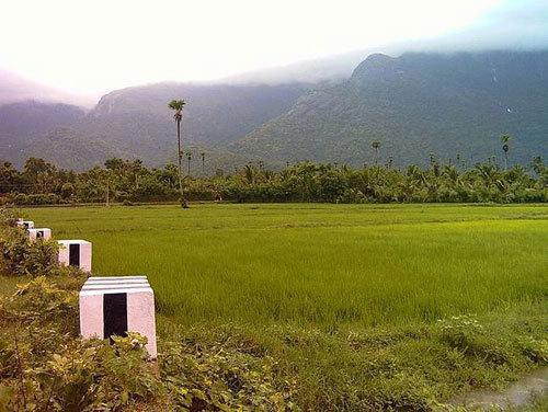 A Mountain Side Paddy Field in Kerala
