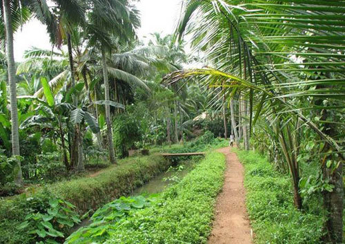 A Typical Country Side Path in Kerala