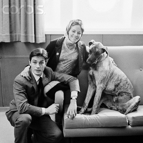 Alain Delon wallpaper possibly containing a great dane called Alain and Nathalie