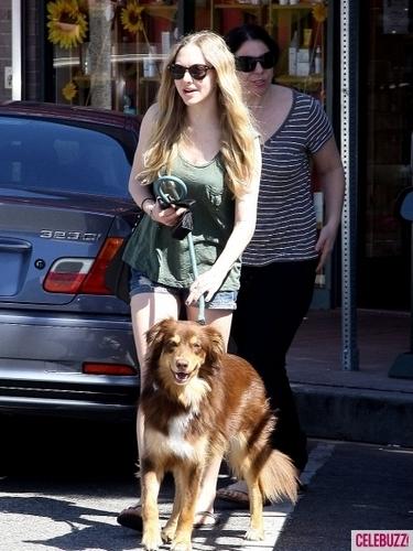 Amanda Seyfried's Dog 日 Afternoon (PHOTOS)