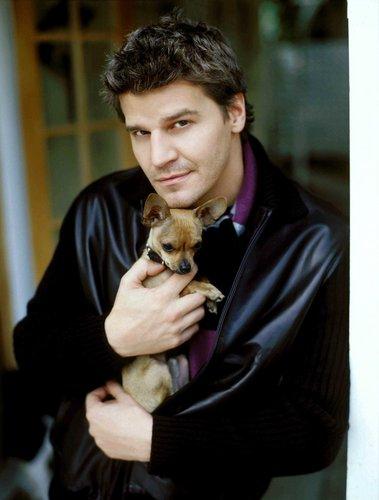 David Boreanaz and chihuahua