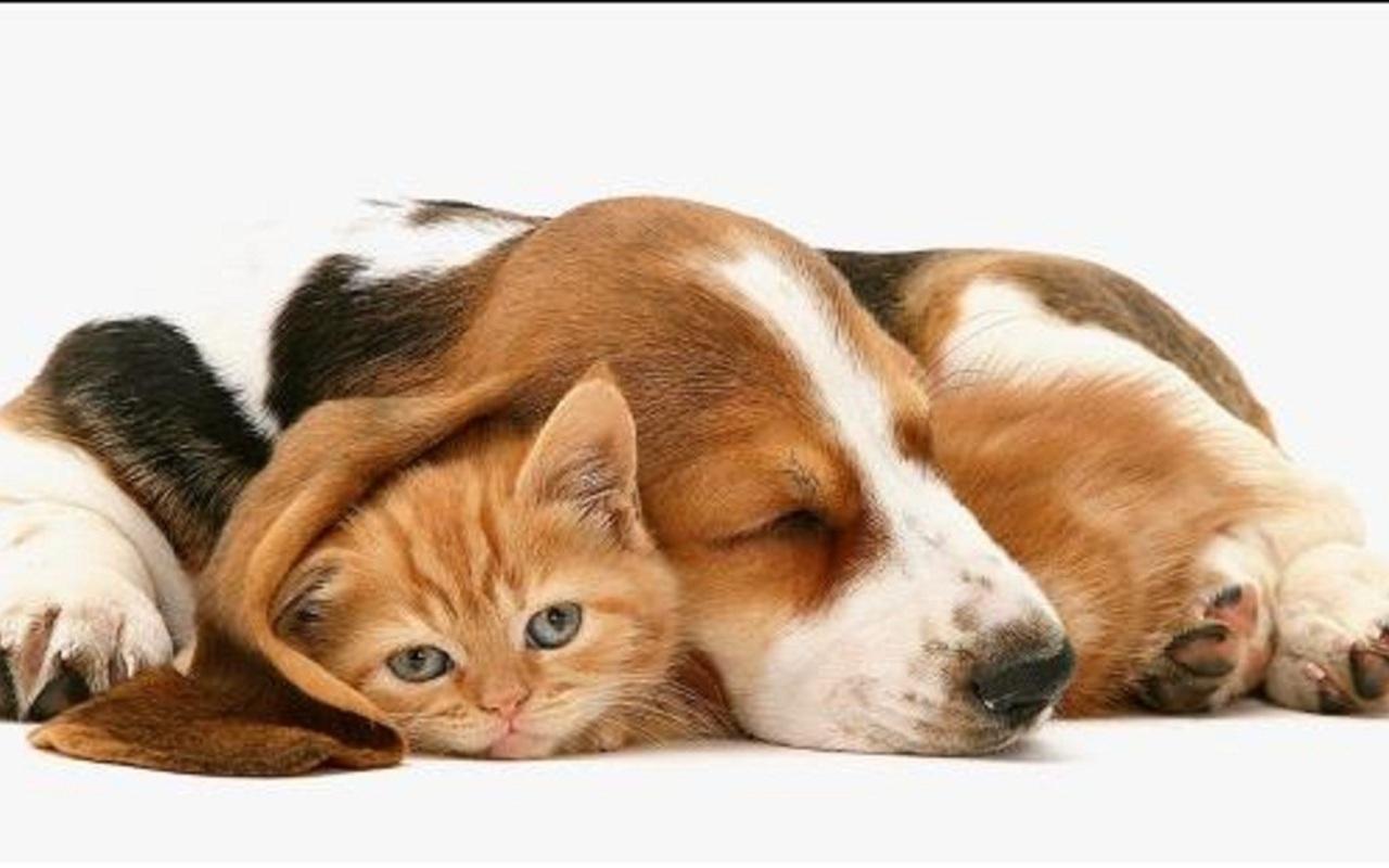 So cute puppies wallpaper 15897245 fanpop - Cute Dog Teddy Teddybear64 Photo 18746292 Fanpop Fanclubs