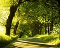 green - Green Forest Wallpaper wallpaper