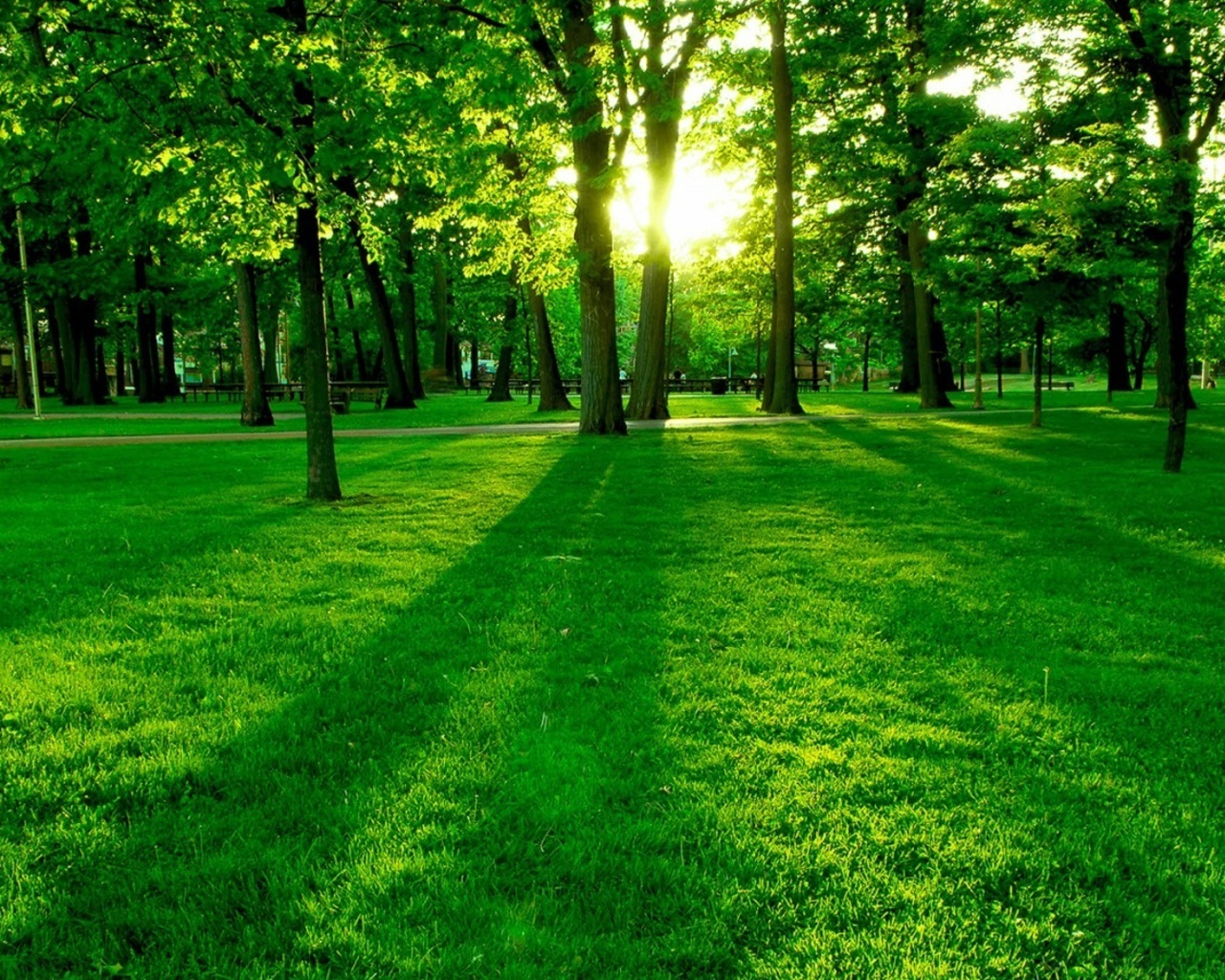 Beautiful green nature