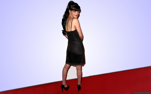 Pauley Perrette (Abby) 바탕화면