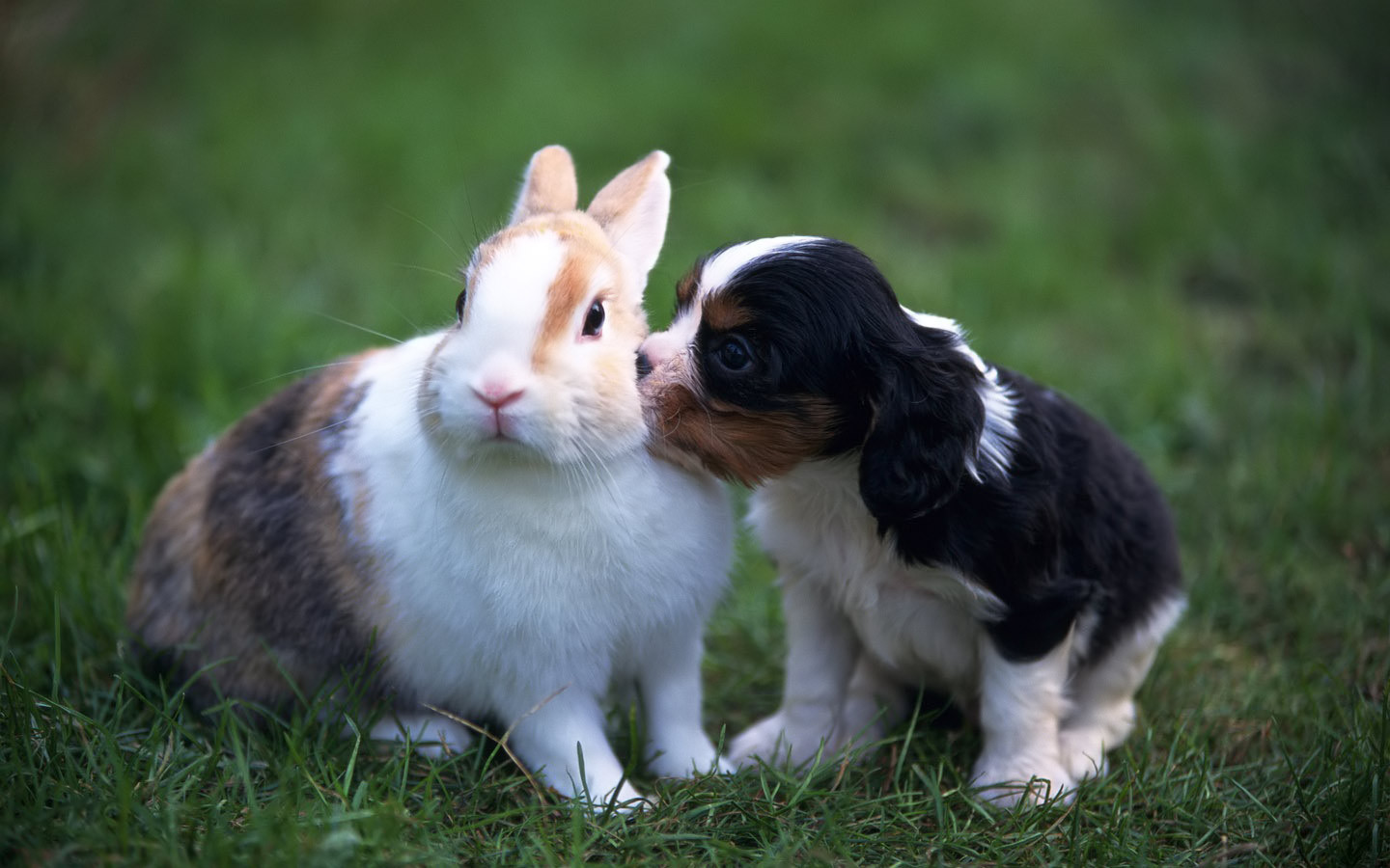 Teddybear64 Images Puppy And Rabbit HD Wallpaper Background Photos