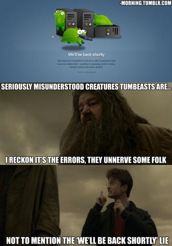 Seriously misunderstood creatures!