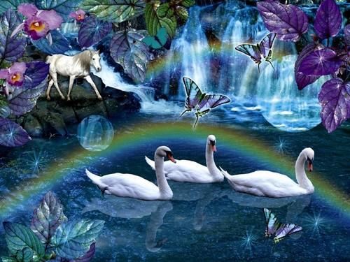 白鳥, スワン Daydream