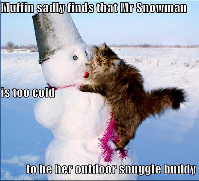 Animal humor cat funny