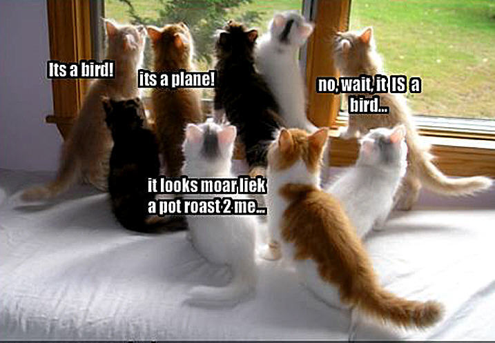 Animal Humor cat funny