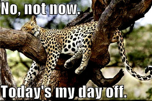 Animal Humor wallpaper called cheetah funny