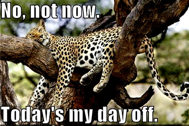 Cheetah quotes - photo#20
