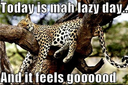 cheetah funny