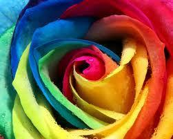 Bright Colors Images More Colorful Art Wallpaper And Background