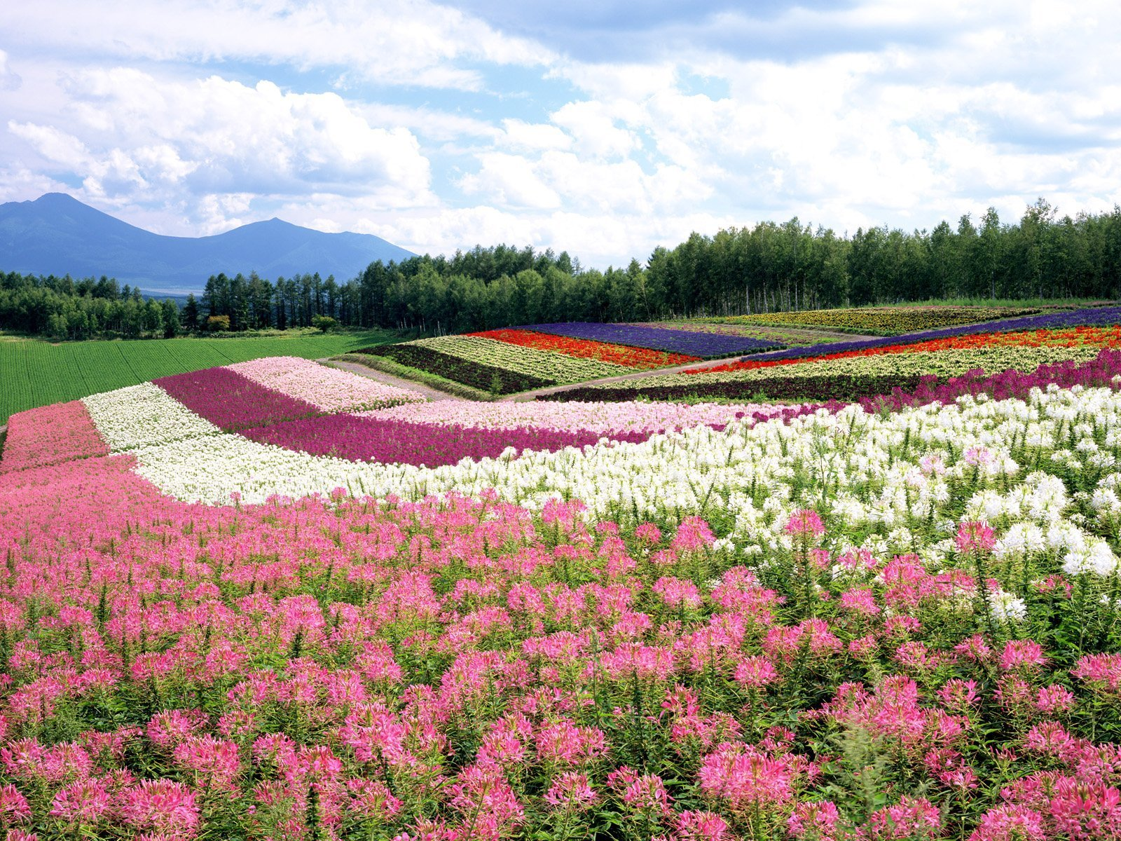 Beautiful Places Images Beautiful Japan Hd Wallpaper And Background Photos 20150796