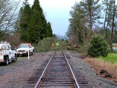 Massive tress fall in Sunday's wind storm in my state of Oregon