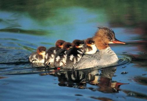 Mothers Любовь their children