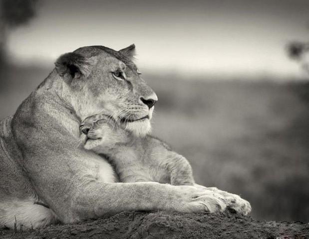 Mothers-love-their-children-animals-20186514-619-480 - Mother's Love - Love Talk
