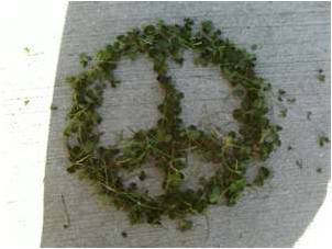 Peace Of Clovers