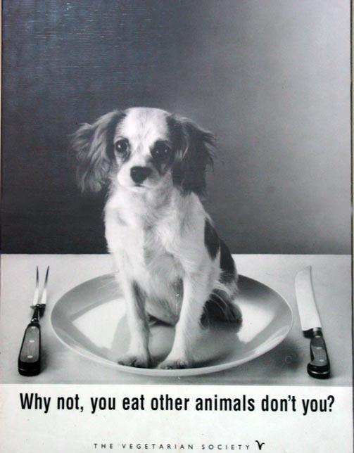 sad animal pictures