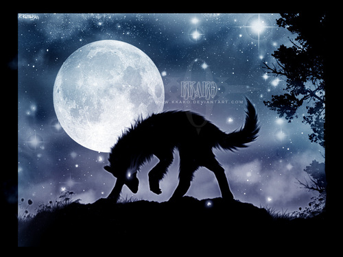 the Anubian's wolf pack wallpaper titled Wolves