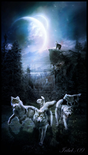 the Anubian's wolf pack wallpaper probably with a sign entitled Wolves