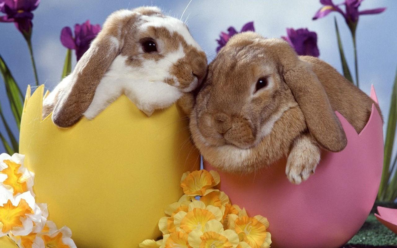 Bunny rabbits bunny