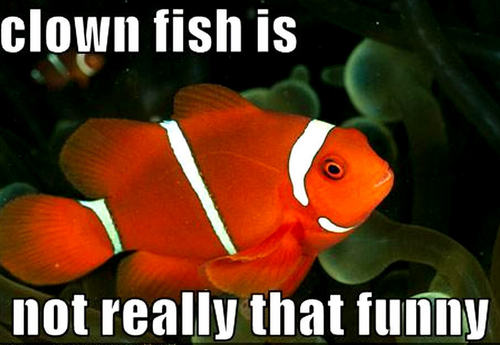 Animal Humor wallpaper titled clownfish funny