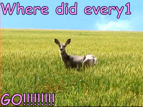 Animal Humor wallpaper entitled deer funny
