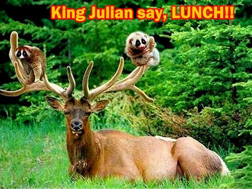 deer & monkey funny