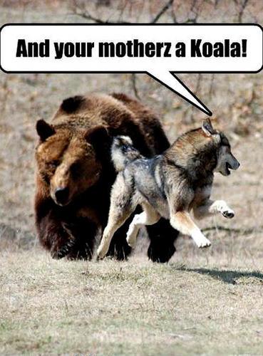 dog & menanggung, bear funny