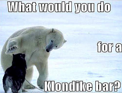 dog & beruang funny