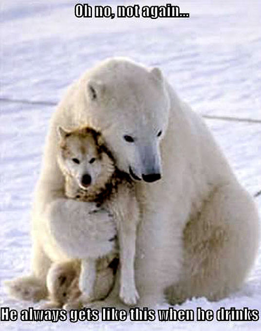 Funny Polar Bear and Wolf