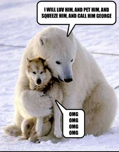 Animal Humor wallpaper probably containing a harp seal entitled dog & bear funny