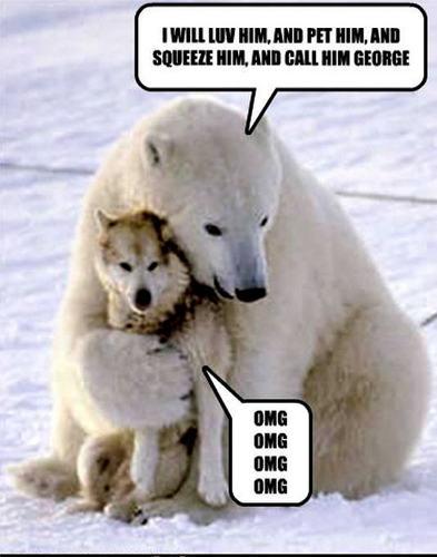 dog & bear funny