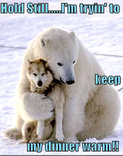 dog & медведь funny