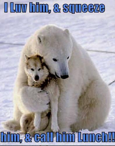 dog & oso, oso de funny