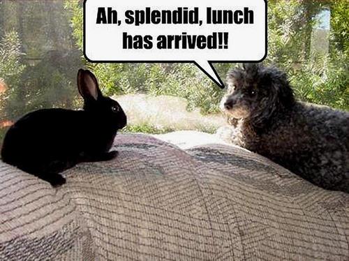 dog & bunny funny