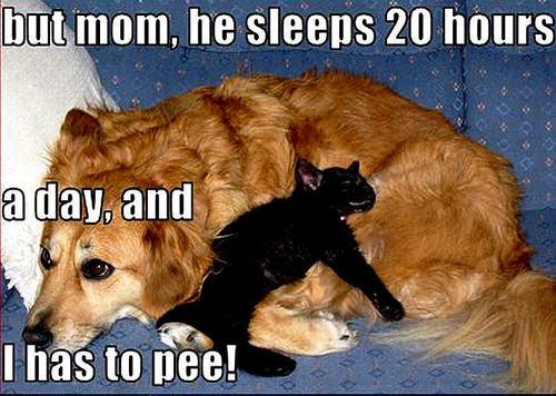 dog & cat funny