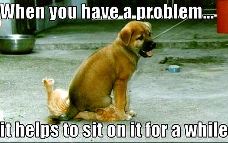 Animal Humor Images Dog Cat Funny Wallpaper And Background Photos