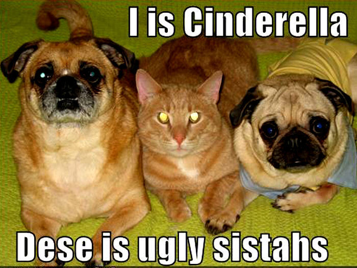 Animal humor dog cat funny